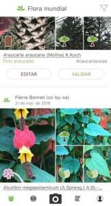 PlantNet Identificación Planta 1