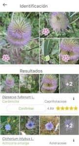 PlantNet Identificación Planta 2