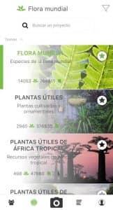 PlantNet Identificación Planta 3