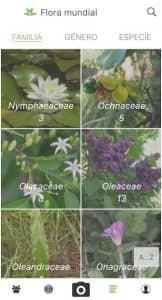 PlantNet Identificación Planta 5