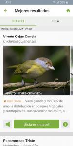 Merlin Bird ID Por Cornell Lab 3