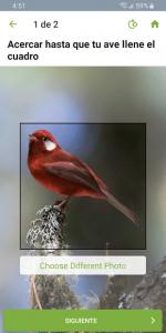 Merlin Bird ID Por Cornell Lab 4